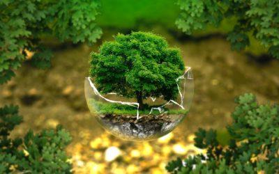 L'écologie : oui mais pourquoi ?